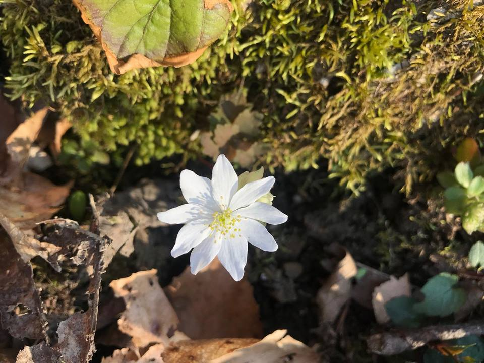Hump Day Hike - Spring Flowers! @ Perry County Park | Hazard | Kentucky | United States